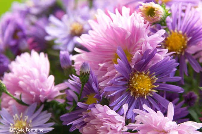 aster fellowship et aster purple dome