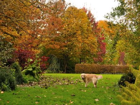 Echapp es cr atives for Entretien jardin automne